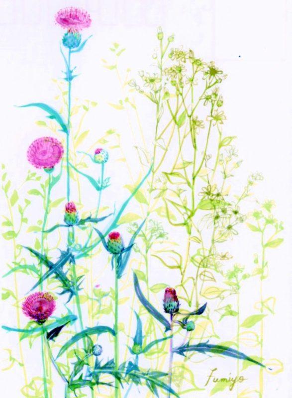 アザミ・白山菊