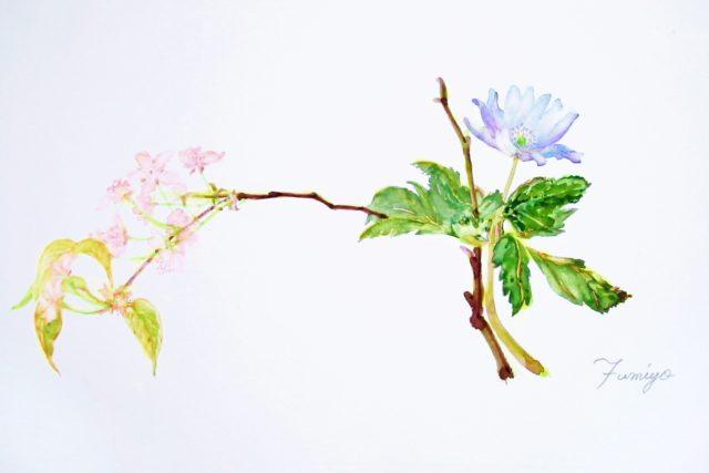 キクサキイチゲ・山桜