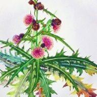 藤井ふみよ―花の絵画館