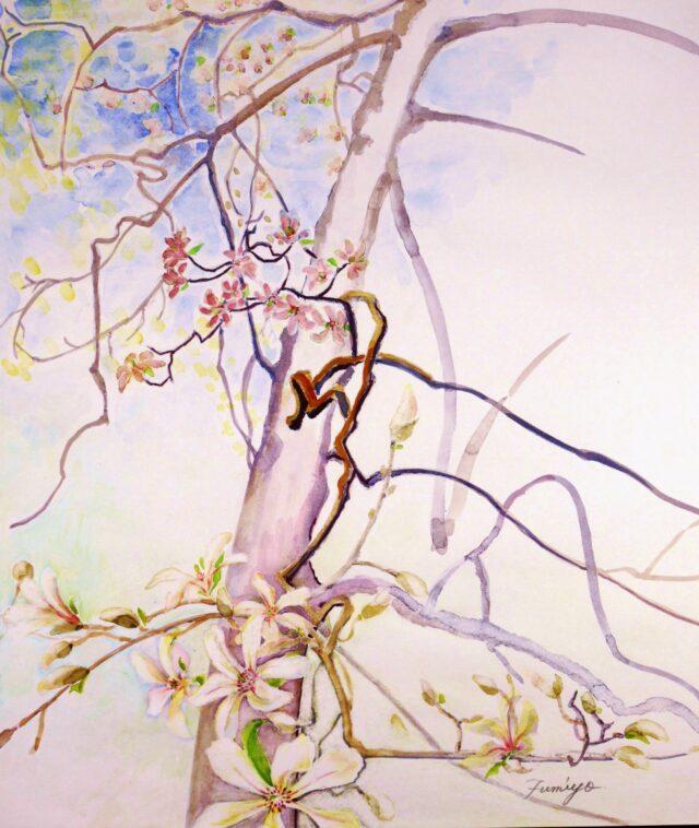 コブシの大木